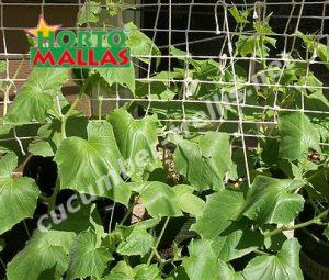 crops in garden using support method