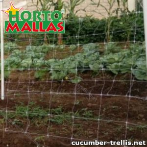 Cucumber trellis give support to the crops